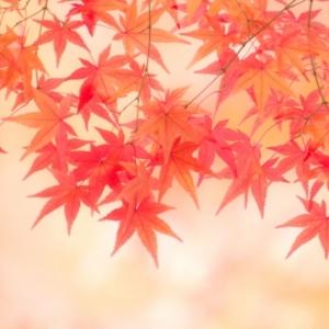 太る? シミができる? 秋に注意するべき美容トラブルはコレ!