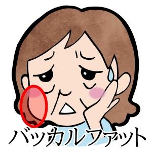 丸顔やブルドック顔の原因「バッカルファット」のケア方法